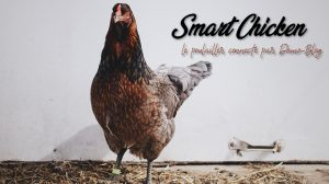 smart-chicken-poulailler-connecte-domotique-iot-eedomus-maison