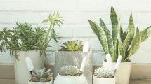 xiaomi-mi-flora-plat-flore-jeedom-test-install-domotique-domoblog-test