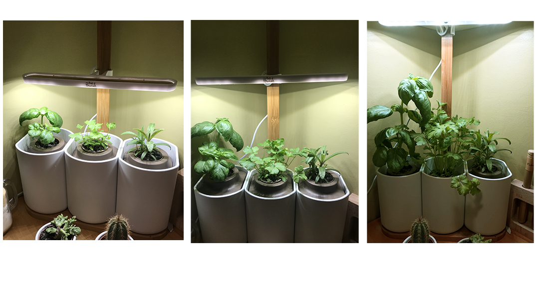 avec le potager connect pr t pousser cultivez des aromates frais toute l 39 ann e page 2 sur 2. Black Bedroom Furniture Sets. Home Design Ideas